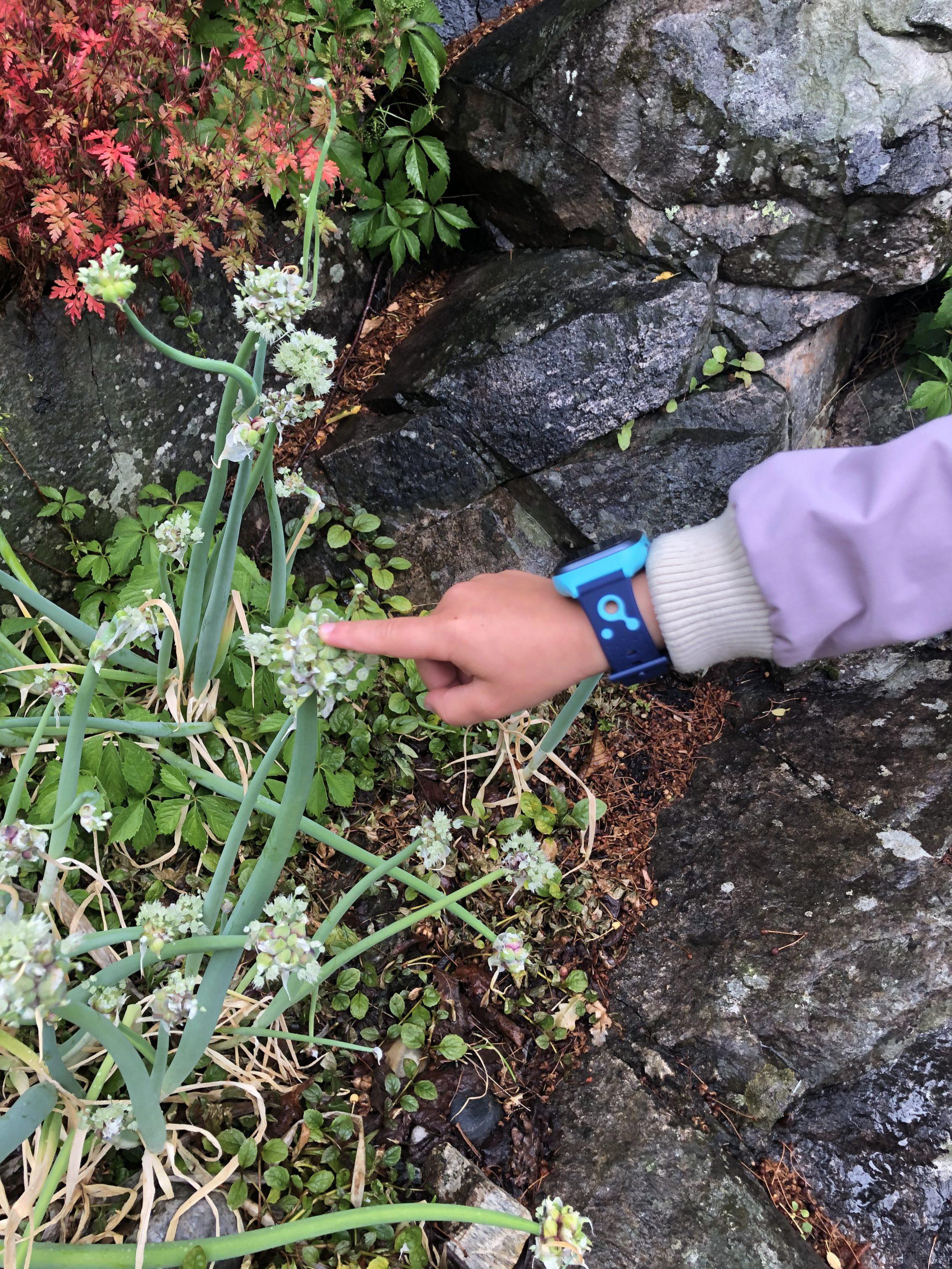 Barn som peker på en plante mens hun har på seg en telefonklokke fra xplora